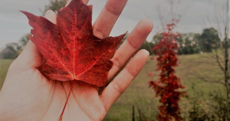 Visa du lịch Canada – Hướng dẫn cách tạo tài khoản online
